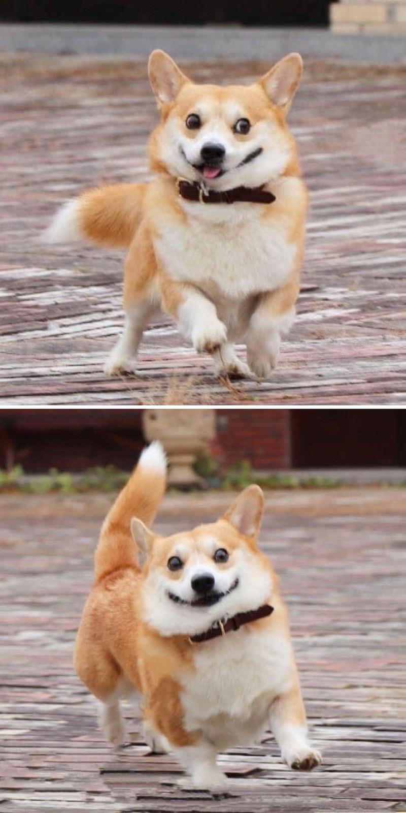 Idol chó mang biểu cảm y hệt Nguyễn Văn Dúi Ảnh 4