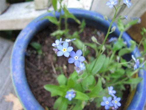 Nàng trồng hoa 'Xin đừng quên em' mong tình yêu chung thủy Ảnh 4