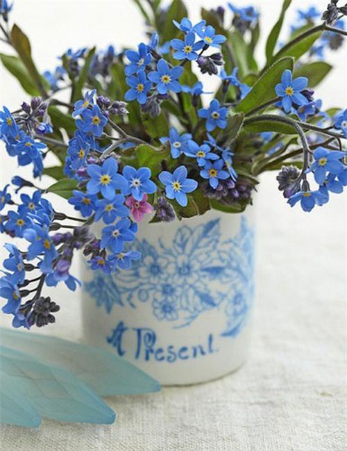 Nàng trồng hoa 'Xin đừng quên em' mong tình yêu chung thủy Ảnh 6