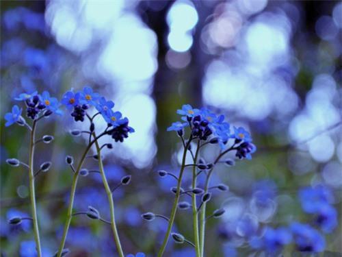 Nàng trồng hoa 'Xin đừng quên em' mong tình yêu chung thủy Ảnh 3