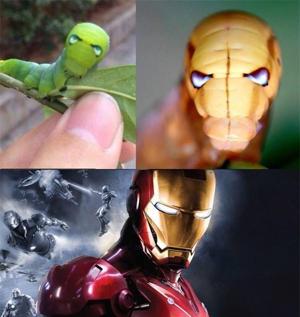 Ngỡ ngàng trước loài sâu bướm 'hóa trang' giống hệt siêu anh hùng Ảnh 3