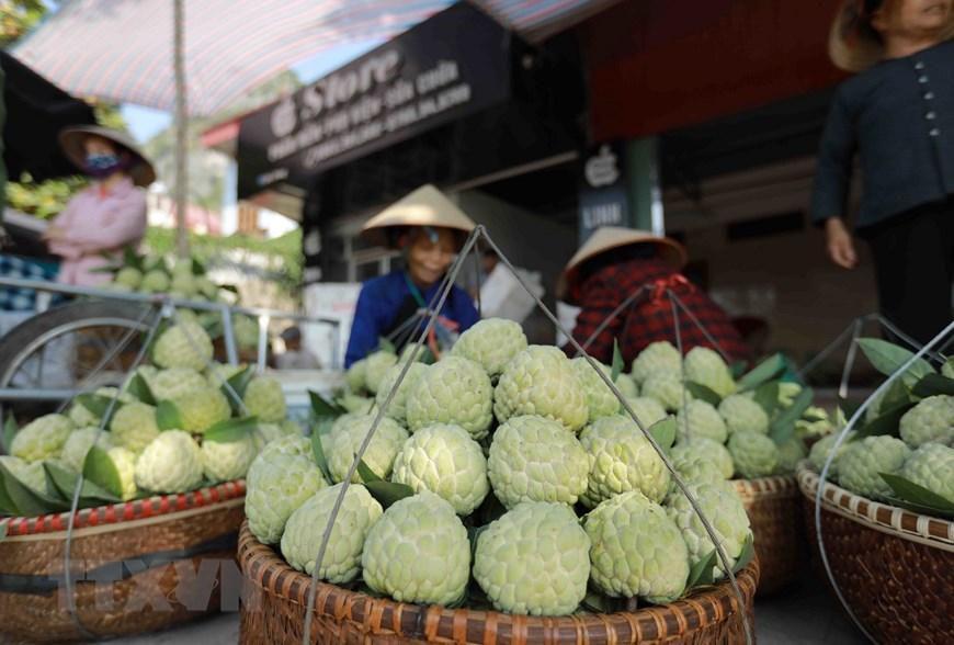 Lạng Sơn chủ động quảng bá cho sản phẩm đặc sản na 'Chi Lăng' Ảnh 5