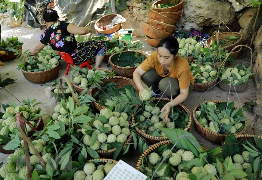 Lạng Sơn chủ động quảng bá cho sản phẩm đặc sản na 'Chi Lăng' Ảnh 9