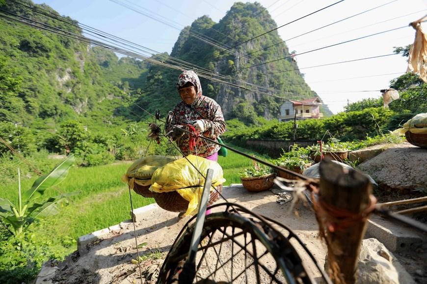 Lạng Sơn chủ động quảng bá cho sản phẩm đặc sản na 'Chi Lăng' Ảnh 4