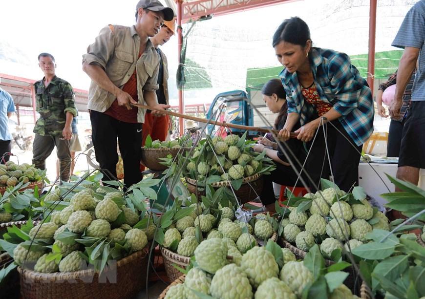Lạng Sơn chủ động quảng bá cho sản phẩm đặc sản na 'Chi Lăng' Ảnh 8