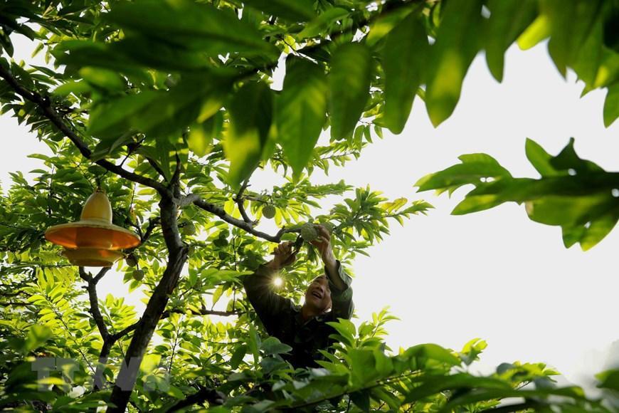 Lạng Sơn chủ động quảng bá cho sản phẩm đặc sản na 'Chi Lăng' Ảnh 1