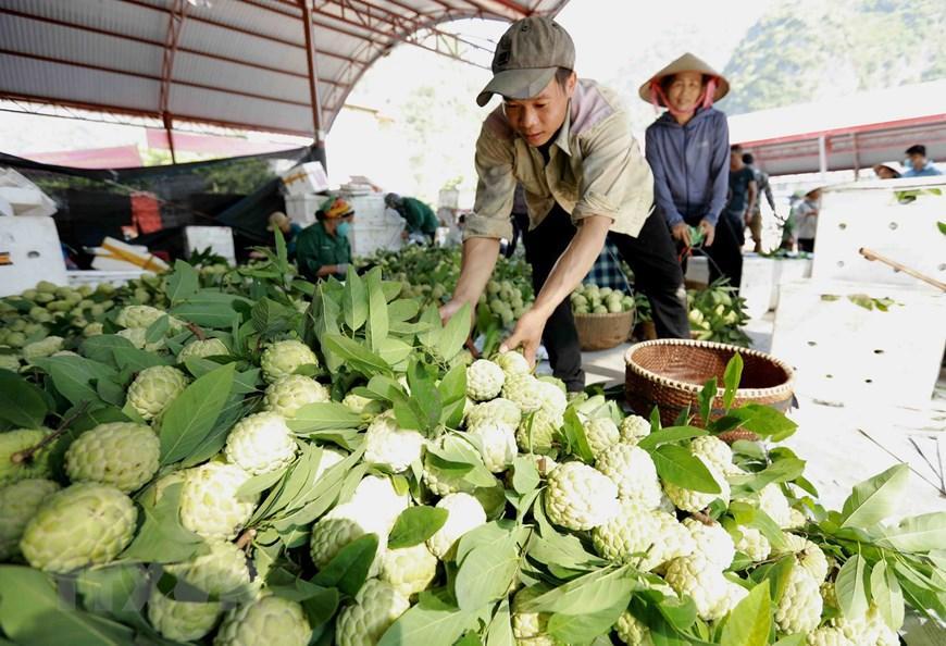Lạng Sơn chủ động quảng bá cho sản phẩm đặc sản na 'Chi Lăng' Ảnh 10