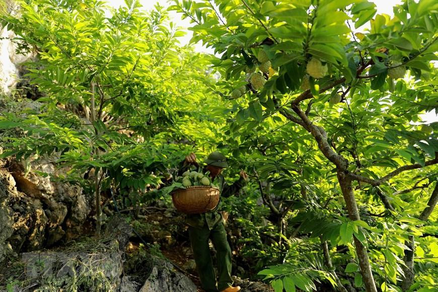 Lạng Sơn chủ động quảng bá cho sản phẩm đặc sản na 'Chi Lăng' Ảnh 2
