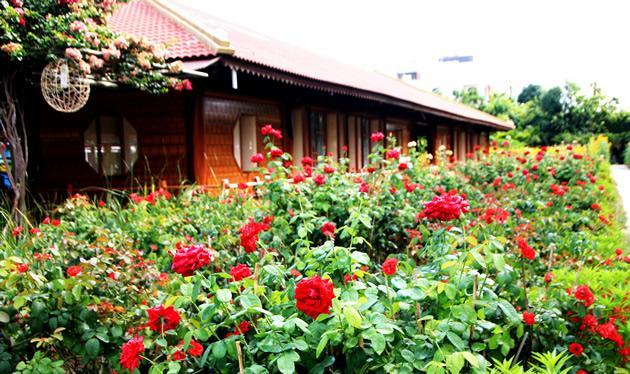 Vườn hoa hồng trong lòng phố Ảnh 1