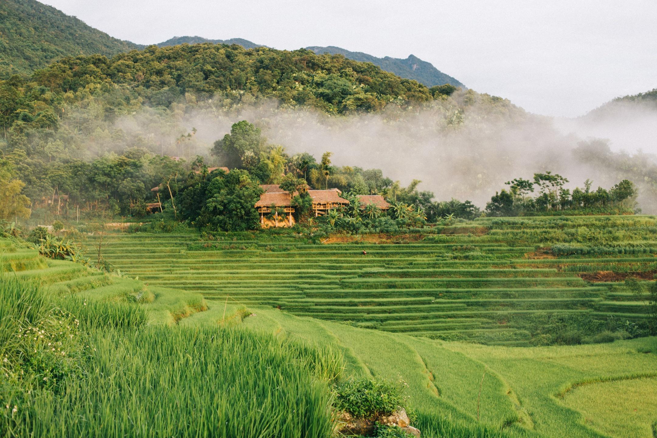 Tháng 9, đến Pù Luông ngắm lúa Ảnh 1
