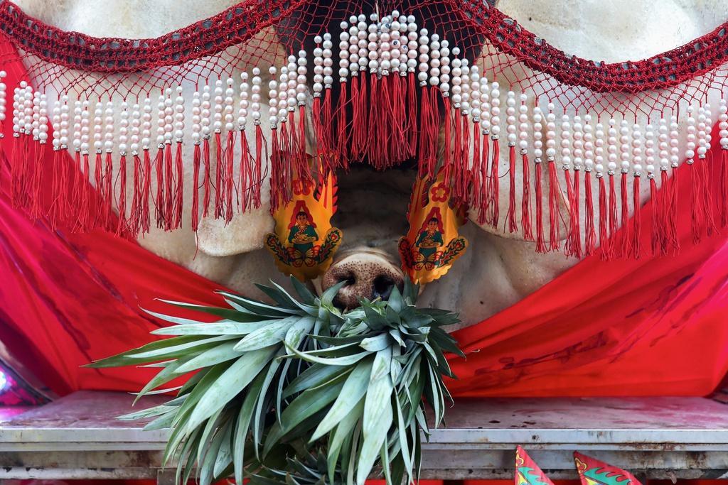 Lễ hội rước 'lợn thần' gây tranh cãi ở Đài Loan Ảnh 5