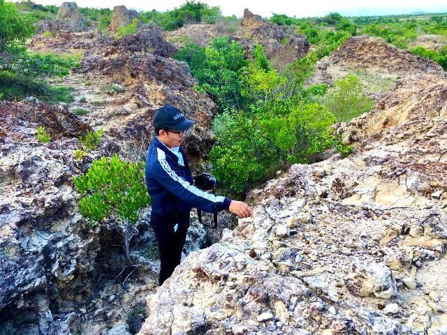 Ninh Thuận: Phát hiện bãi rạn san hộ cổ hóa thạch 'có một không hai' Ảnh 1