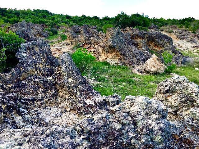Ninh Thuận: Phát hiện bãi rạn san hộ cổ hóa thạch 'có một không hai' Ảnh 4