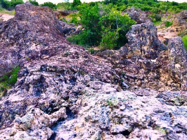 Ninh Thuận: Phát hiện bãi rạn san hộ cổ hóa thạch 'có một không hai' Ảnh 5