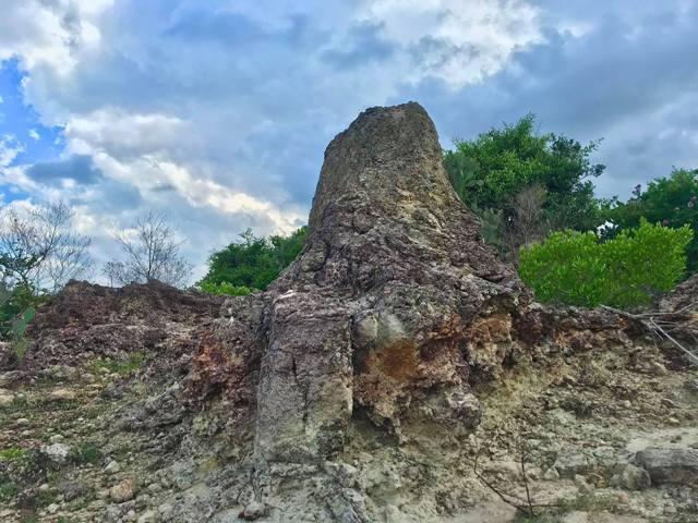 Ninh Thuận: Phát hiện bãi rạn san hộ cổ hóa thạch 'có một không hai' Ảnh 3