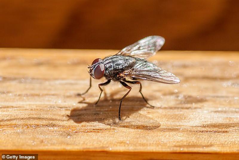 Dùng vợt bắt ruồi, không ngờ làm nổ tung căn nhà Ảnh 2