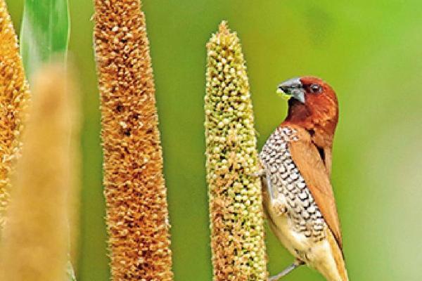 Người đàn ông dùng 2.000 mét vuông đất nuôi hàng trăm con chim hoang dã Ảnh 2