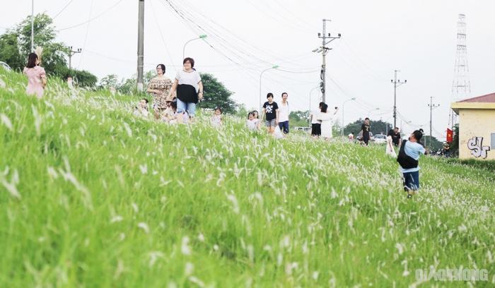 Cuối tuần, người Hà Nội nườm nượp tới chụp ảnh ở 'thiên đường' hoa cỏ tranh Ảnh 2