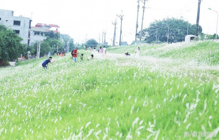 Cuối tuần, người Hà Nội nườm nượp tới chụp ảnh ở 'thiên đường' hoa cỏ tranh Ảnh 1