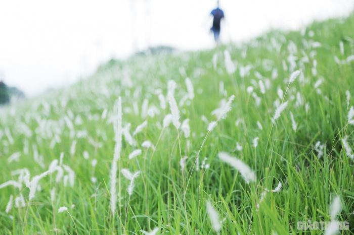 Cuối tuần, người Hà Nội nườm nượp tới chụp ảnh ở 'thiên đường' hoa cỏ tranh Ảnh 10