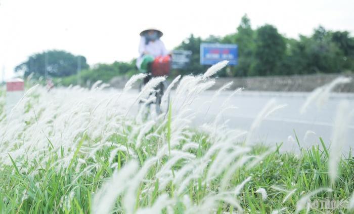 Cuối tuần, người Hà Nội nườm nượp tới chụp ảnh ở 'thiên đường' hoa cỏ tranh Ảnh 11