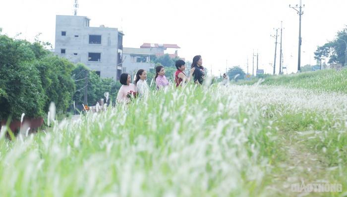 Cuối tuần, người Hà Nội nườm nượp tới chụp ảnh ở 'thiên đường' hoa cỏ tranh Ảnh 9