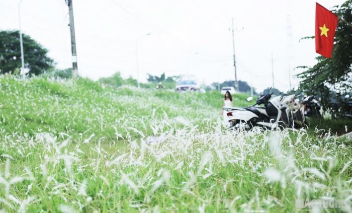 Cuối tuần, người Hà Nội nườm nượp tới chụp ảnh ở 'thiên đường' hoa cỏ tranh Ảnh 3