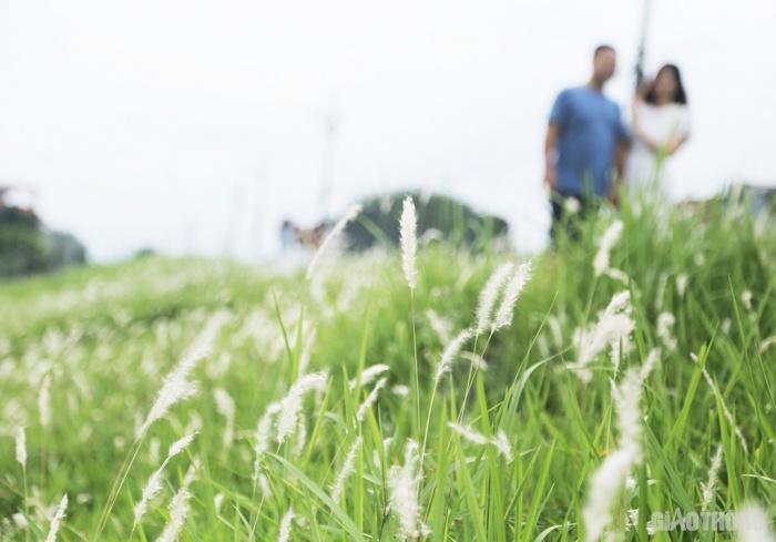 Cuối tuần, người Hà Nội nườm nượp tới chụp ảnh ở 'thiên đường' hoa cỏ tranh Ảnh 4