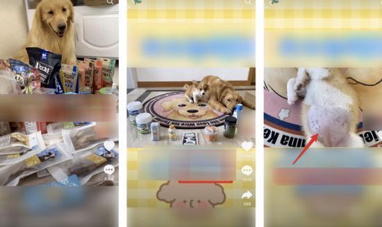 Xuất hiện trào lưu ép thú cưng quay vlog để nổi tiếng: Từ ép ăn 100 món đến ăn gà sống, ớt cay Ảnh 1