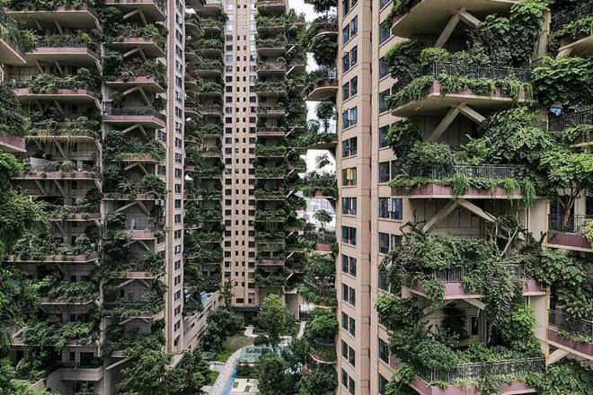 Muỗi khiến hàng loạt gia đình rời bỏ chung cư xanh ở Thành Đô Ảnh 1