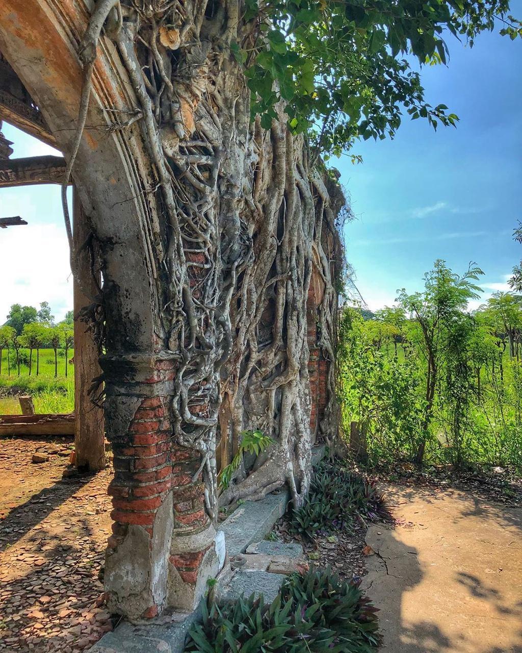 Ngôi đình hơn 100 tuổi nằm dưới bộ rễ cây bồ đề Ảnh 3