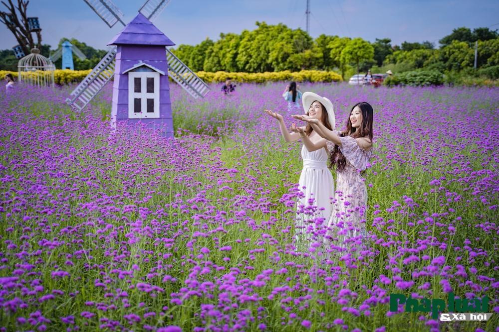 Mê mẩn với vườn oải hương thảo tím biếc giữa lòng Hà Nội Ảnh 12