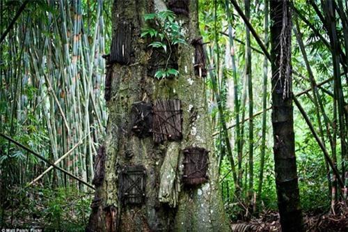 Kỳ lạ nghi lễ chôn cất hài nhi trong thân cây ở Indonesia Ảnh 2