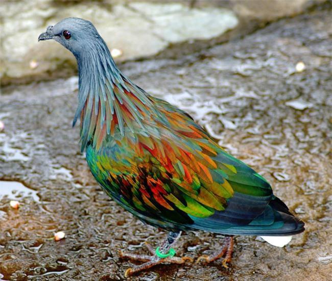 20 loài vật có màu sắc rực rỡ, 'độc' nhất thế giới Ảnh 1