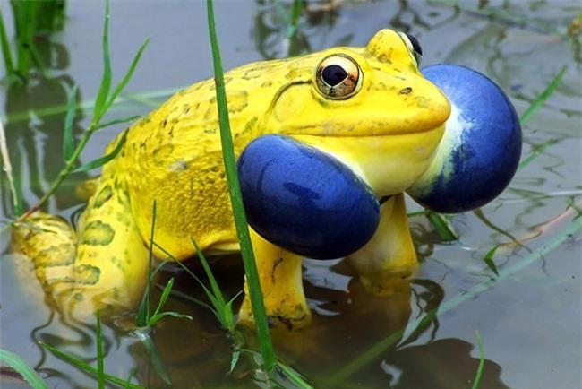20 loài vật có màu sắc rực rỡ, 'độc' nhất thế giới Ảnh 12