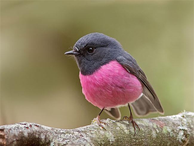 20 loài vật có màu sắc rực rỡ, 'độc' nhất thế giới Ảnh 14