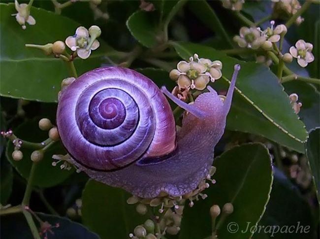 20 loài vật có màu sắc rực rỡ, 'độc' nhất thế giới Ảnh 2
