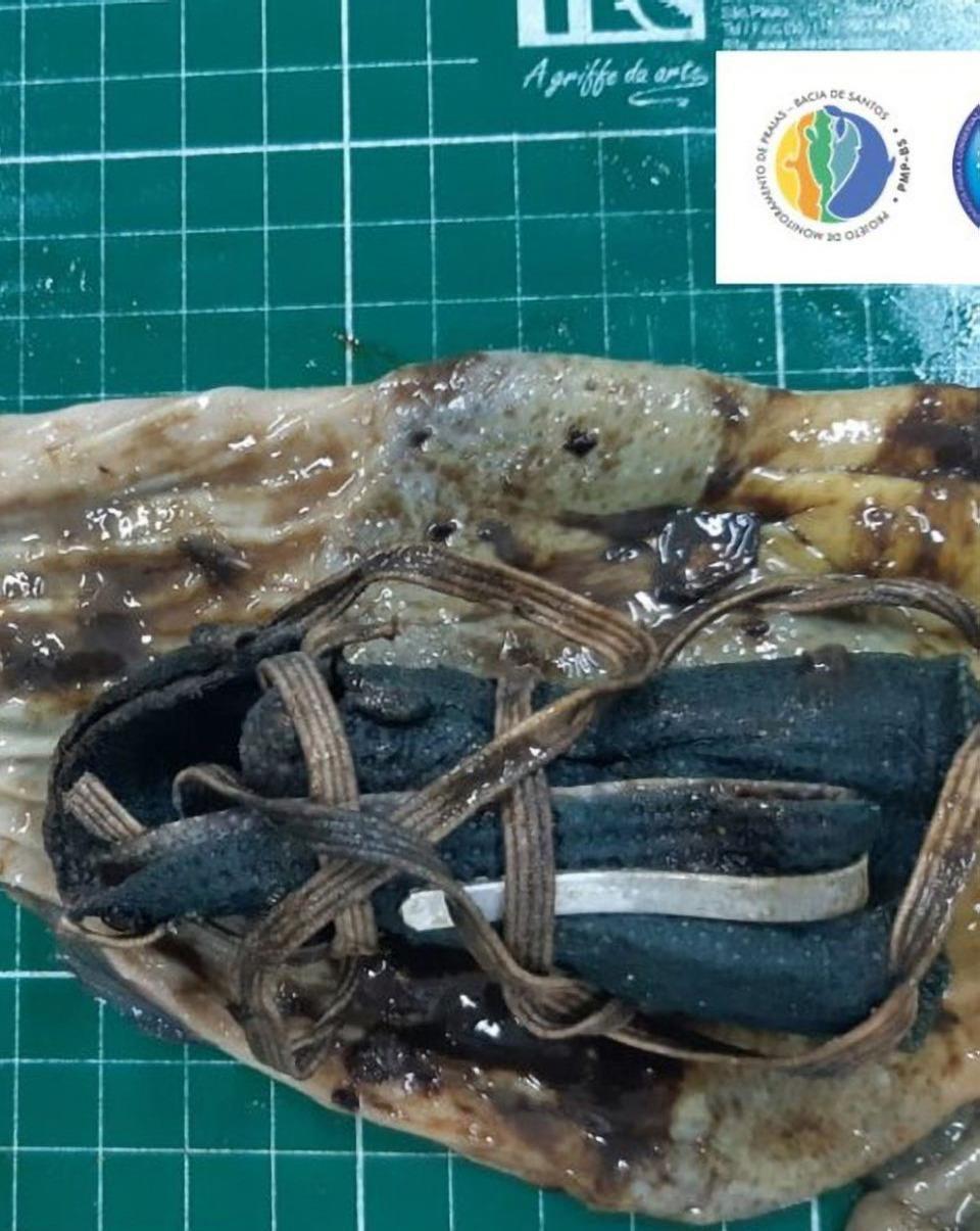 Chim cánh cụt chết thảm vì nuốt phải khẩu trang Ảnh 2
