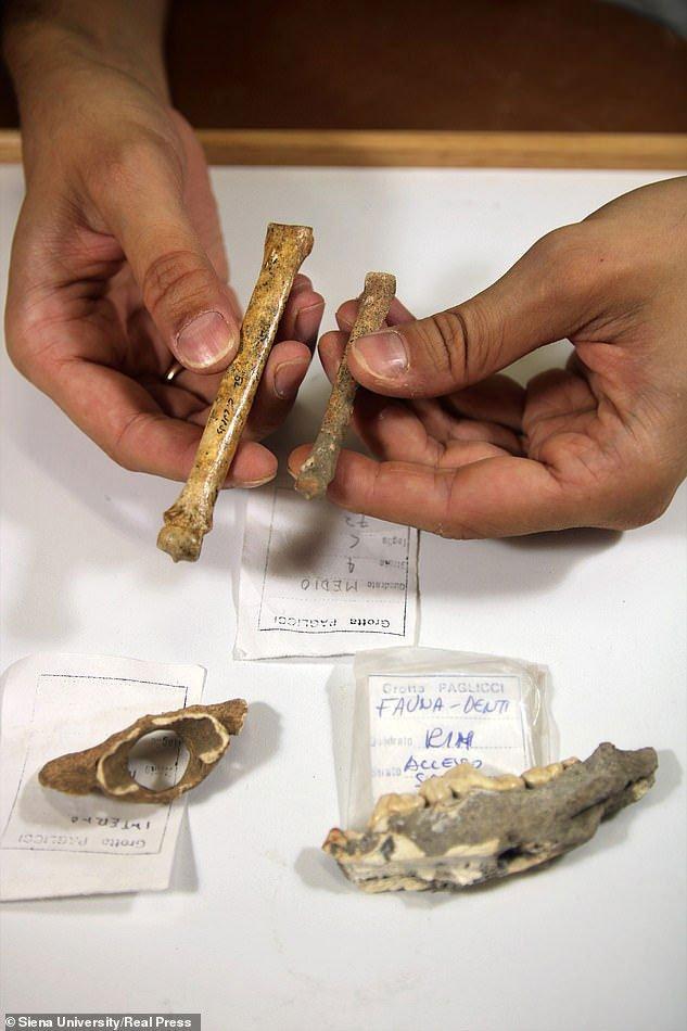 Lộ thân thế bộ hài cốt bí ẩn với những chiếc nanh nhọn trong khu mộ cổ 8.400 năm Ảnh 2