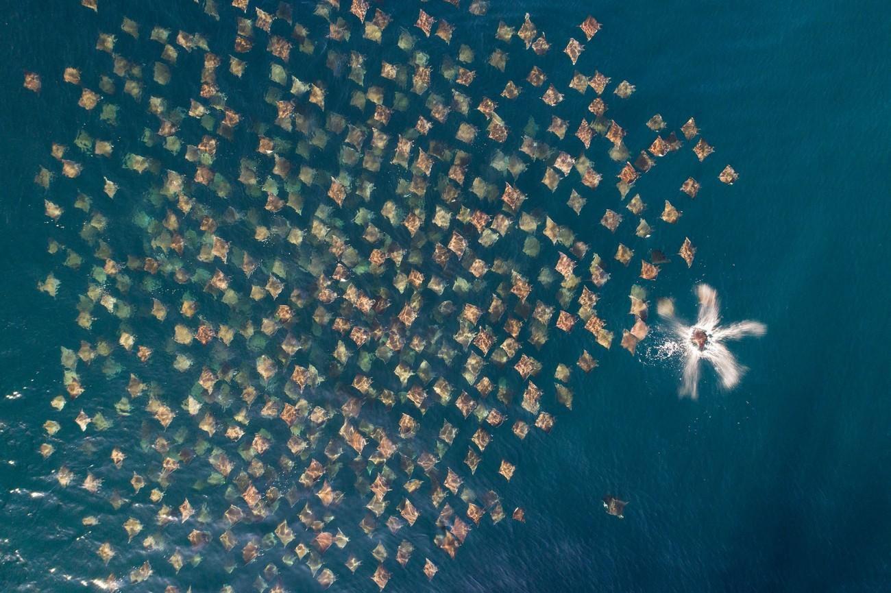 Những bức hình đẹp nhất, ấn tượng nhất của cuộc thi nhiếp ảnh Drone Photo Awards 2020 Ảnh 6
