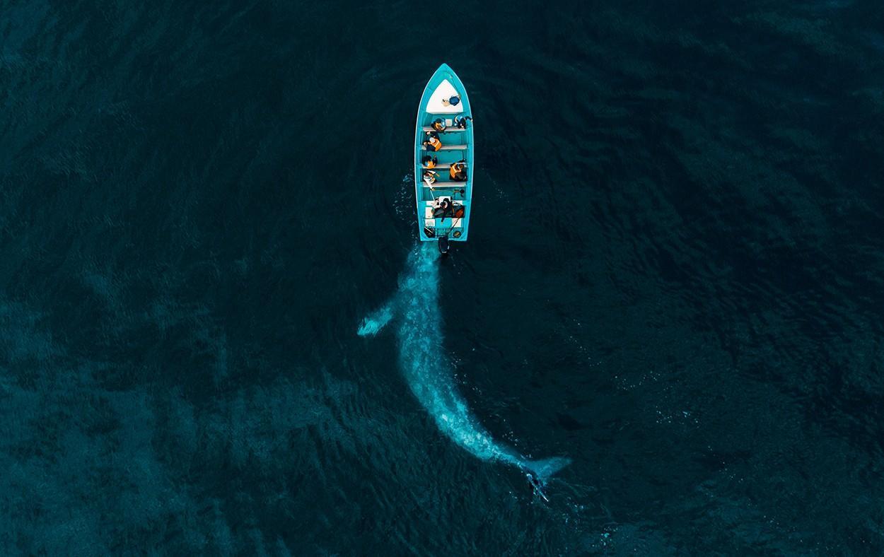 Những bức hình đẹp nhất, ấn tượng nhất của cuộc thi nhiếp ảnh Drone Photo Awards 2020 Ảnh 1