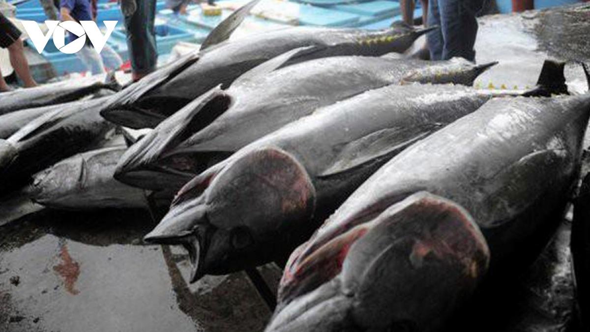 Dự báo xuất khẩu thủy sản 3 tháng cuối năm đạt 2,3 tỷ USD Ảnh 1