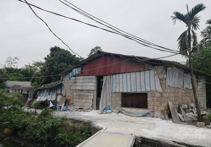 Hà Nam: Xuất hiện dịch tai xanh trên đàn lợn Ảnh 1