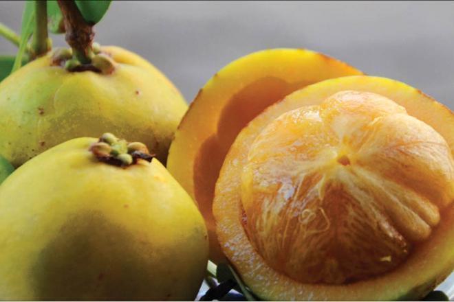 Trắc nghiệm: Những quả 'dại' ăn hoài hồi nhỏ, có loại thăng hạng thành đặc sản Ảnh 1