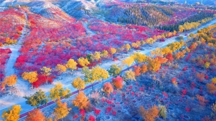 Chùm ảnh: Mùa Thu vàng rực ở Thạch Chủy Sơn, Trung Quốc Ảnh 2