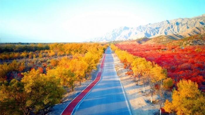 Chùm ảnh: Mùa Thu vàng rực ở Thạch Chủy Sơn, Trung Quốc Ảnh 4