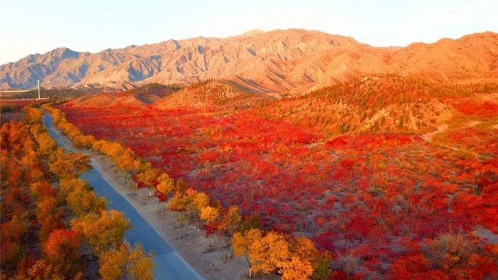 Chùm ảnh: Mùa Thu vàng rực ở Thạch Chủy Sơn, Trung Quốc Ảnh 5