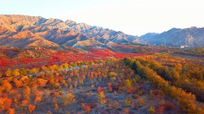 Chùm ảnh: Mùa Thu vàng rực ở Thạch Chủy Sơn, Trung Quốc Ảnh 6