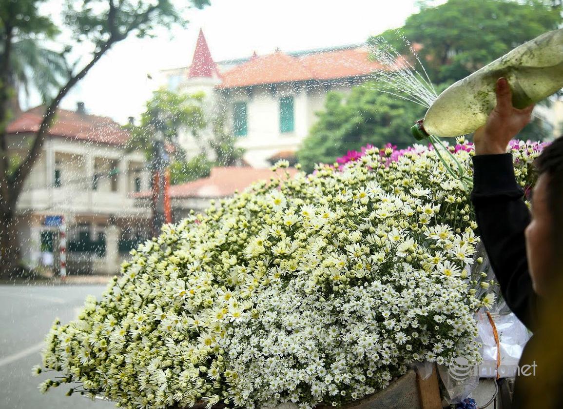 Hà Nội: Cúc họa mi tinh khôi 'xuống phố' đón đông về Ảnh 8