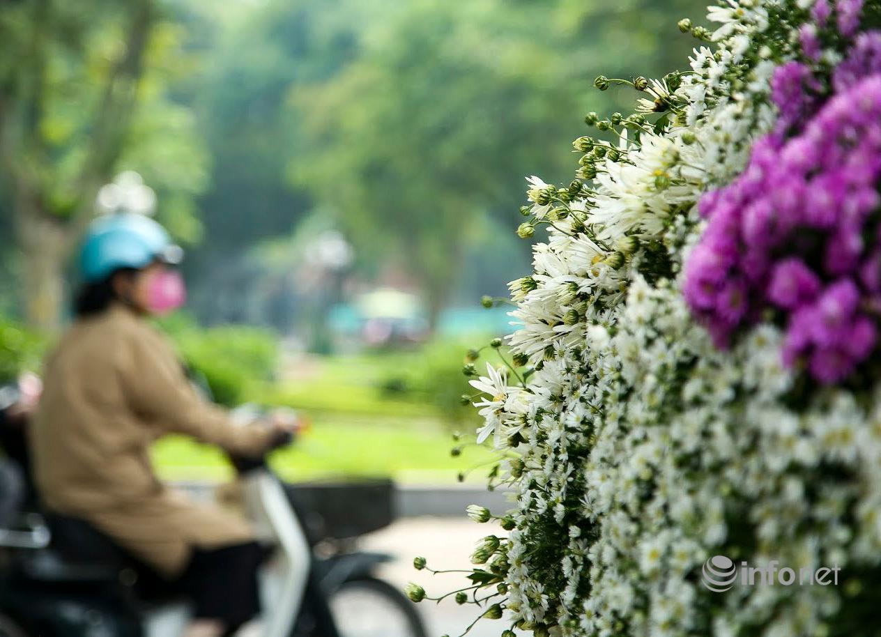 Hà Nội: Cúc họa mi tinh khôi 'xuống phố' đón đông về Ảnh 3